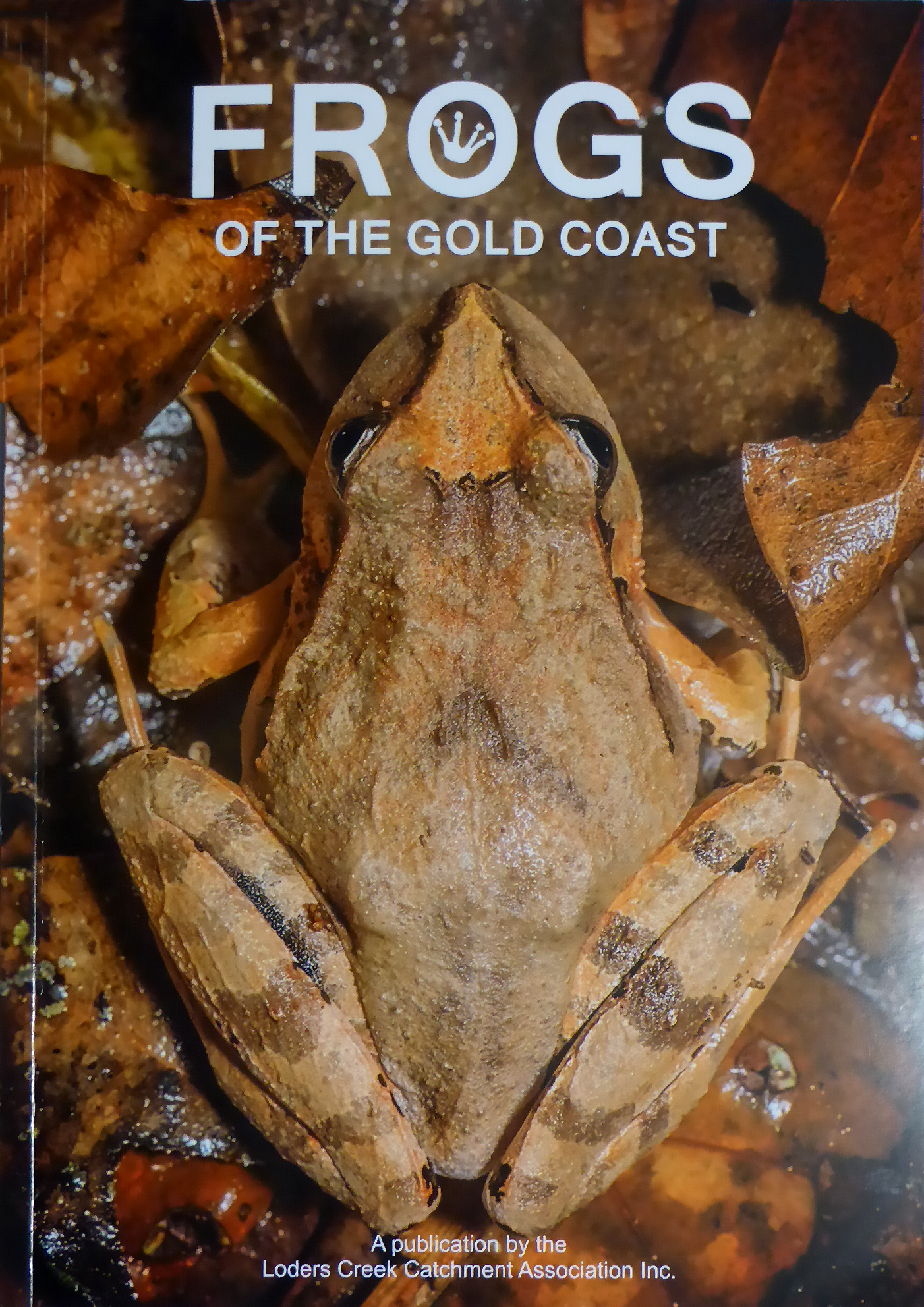 Frogs of Gold Coast